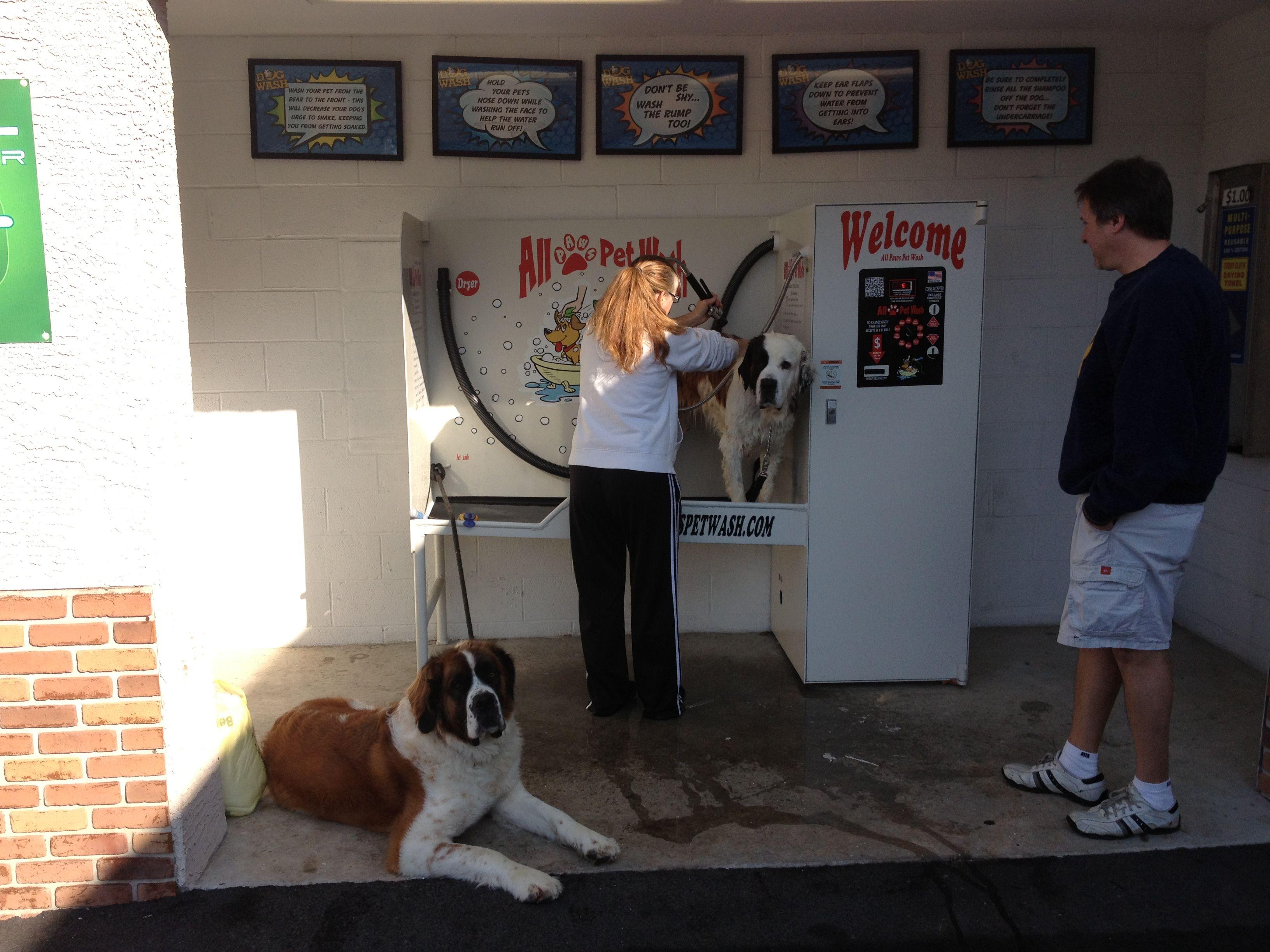 Make your pet dog experience a lavish bath doggy wash is where dog solutioingenieria Gallery
