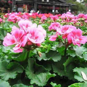Milberger S San Antonio Landscape Nurserymilberger Nursery Best Plant