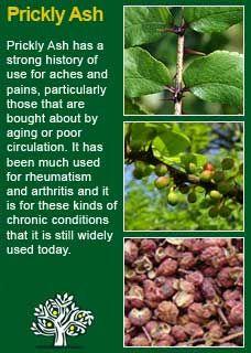 Richard Whelan ~ Medical Herbalist ~ Prickly Ash