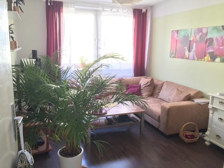 pflanze in wohnzimmer: schöne, zentrale 2-zimmer wohnung