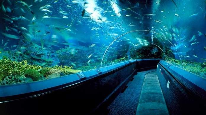 Top 10 Best Aquariums In The World You Must Visit in 2020 ...