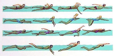 freestyle, breast stroke, back stroke, butterfly