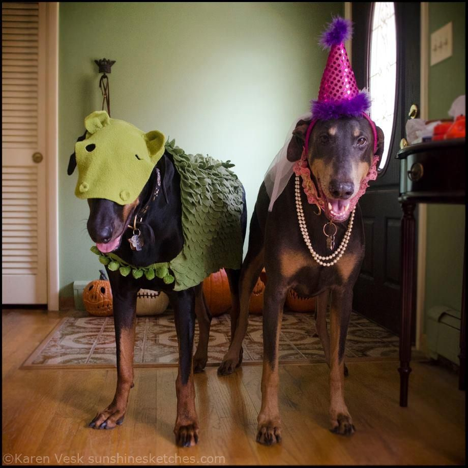 (Princess and the Dragon, shown here)  Last-minute pet Halloween costume ideas from our readers - Canadian Living