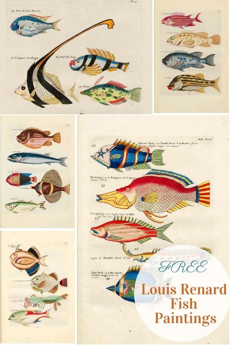 The Beautiful Fish Paintings Of Louis Renard - Picture Box Blue