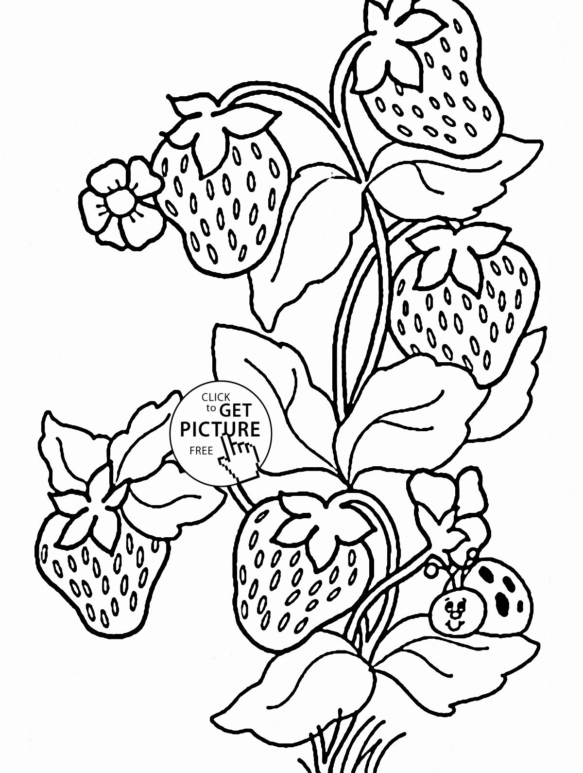 Pin By Marian Kaluza On Designs Flower Coloring Sheets Apple Coloring Pages Animal Coloring Pages