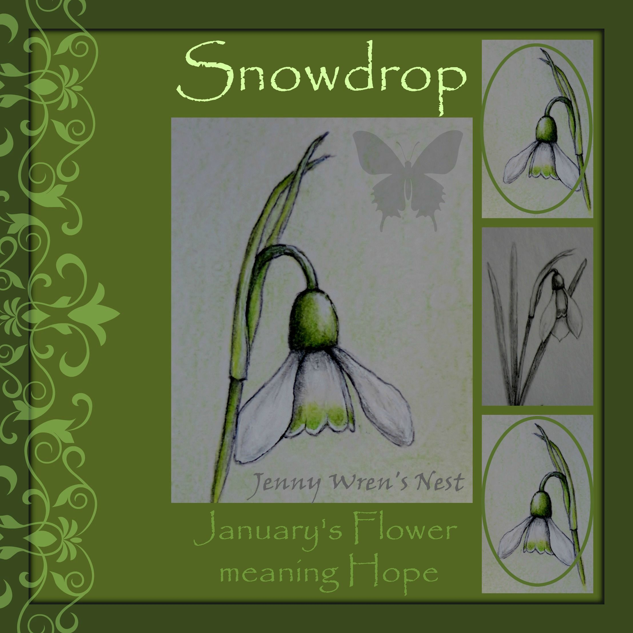 Snowdrop Month Of January Flower And Its Meaning Https Www Facebook Com Jennywrensnest January Flower Flower Meanings Flower Art