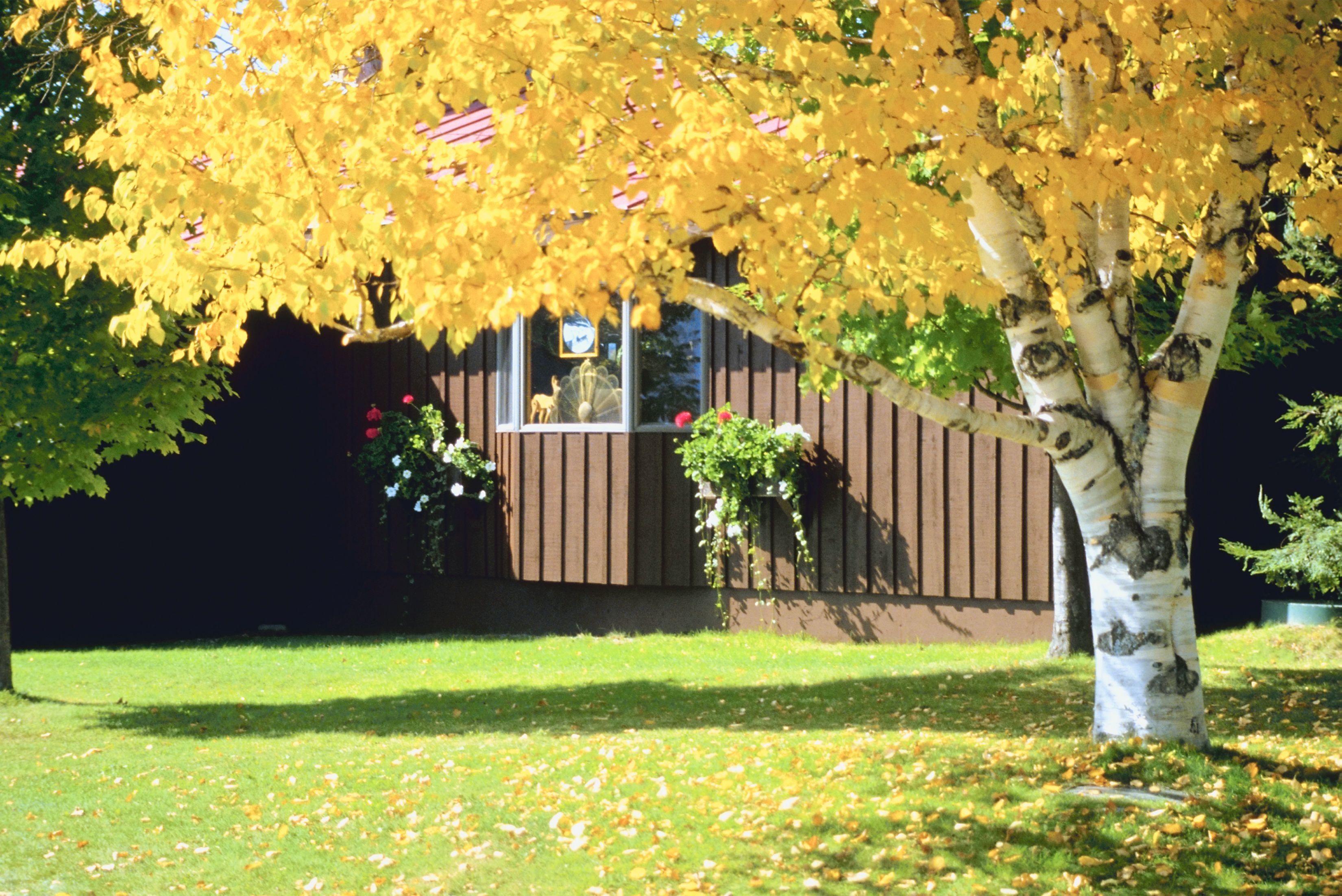 Diez Arboles Perfectos Para Tu Patio Arboles De Sombra Jardin De Otono Raiz De Arbol