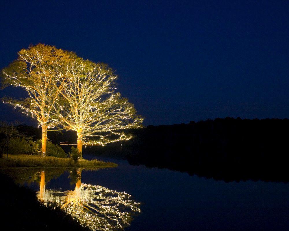 Callaway Gardens Fantasy In Lights Images