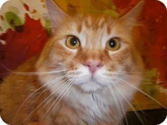 Henderson Nv Domestic Mediumhair Meet Sunny A Cat For