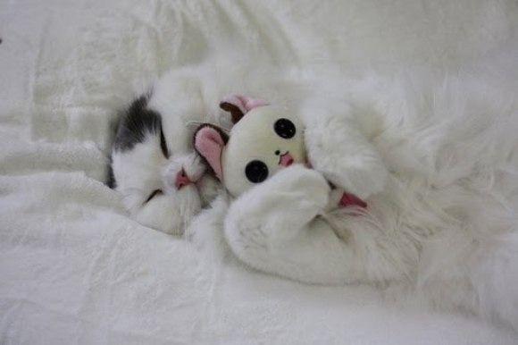 I love stuffed