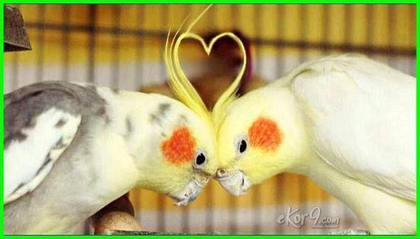 Burung Falk Si Parkit Australia Dunia Fauna Hewan Binatang Tumbuhan Kandang Burung Burung Desain