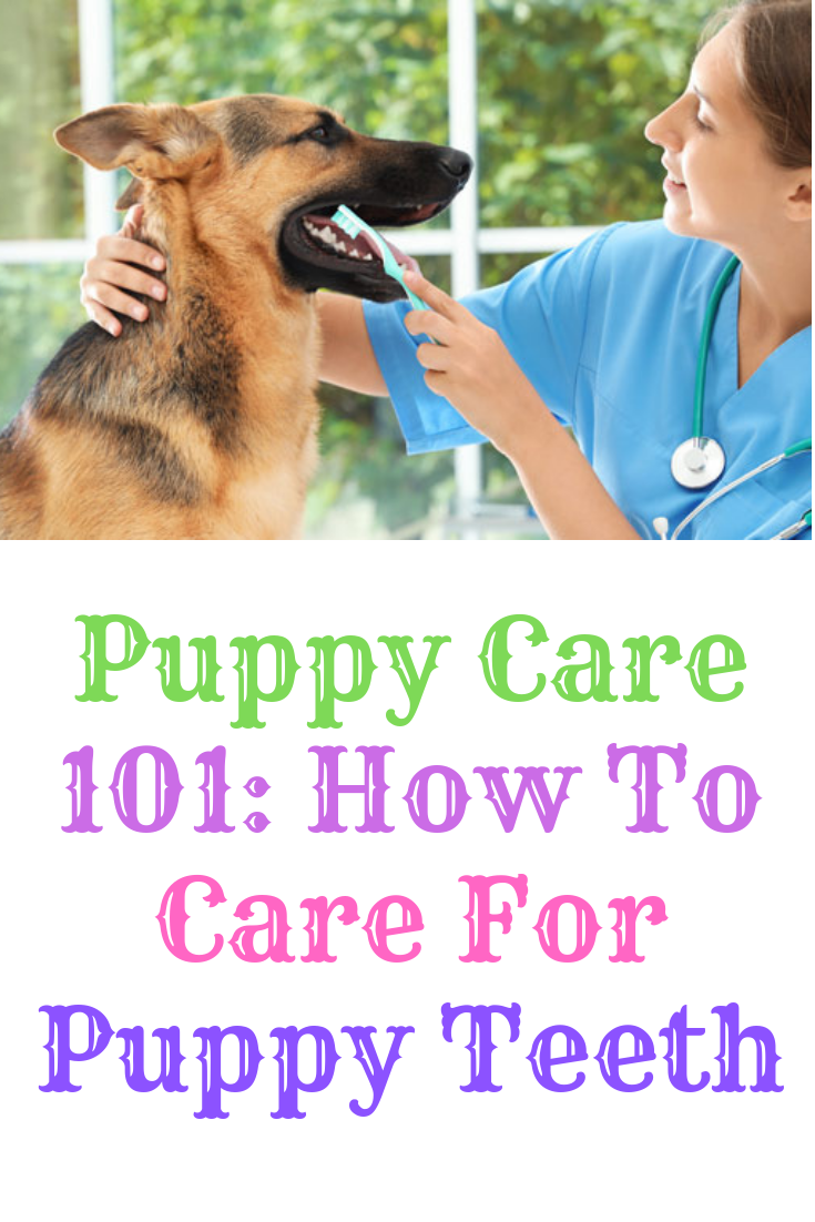 Puppy Care 101 How To Care For Puppy Teeth (With images