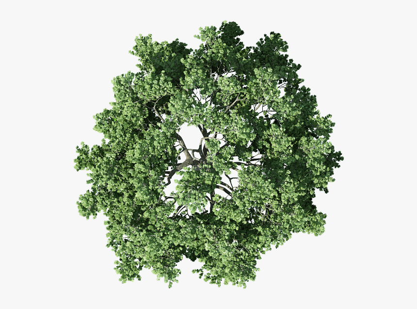Transparent Background Tree Plan Png Png Download Is Free Transparent Png Image To Explore More Similar Hd I Tree Plan Png Trees Top View Tree Plan Photoshop