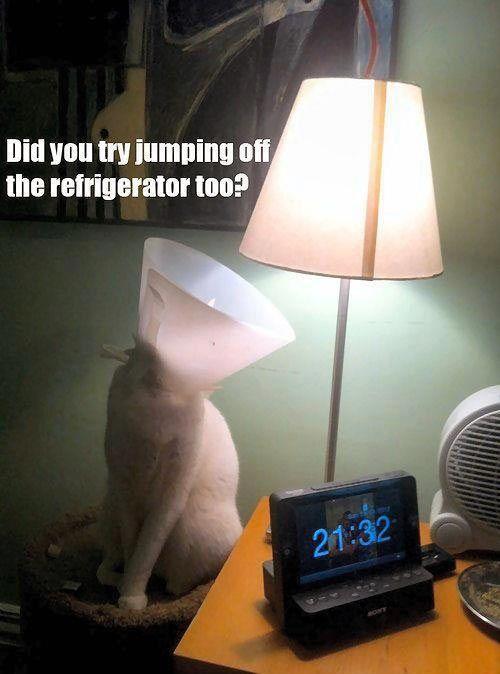 Funny Cat Lamp Joke Picture