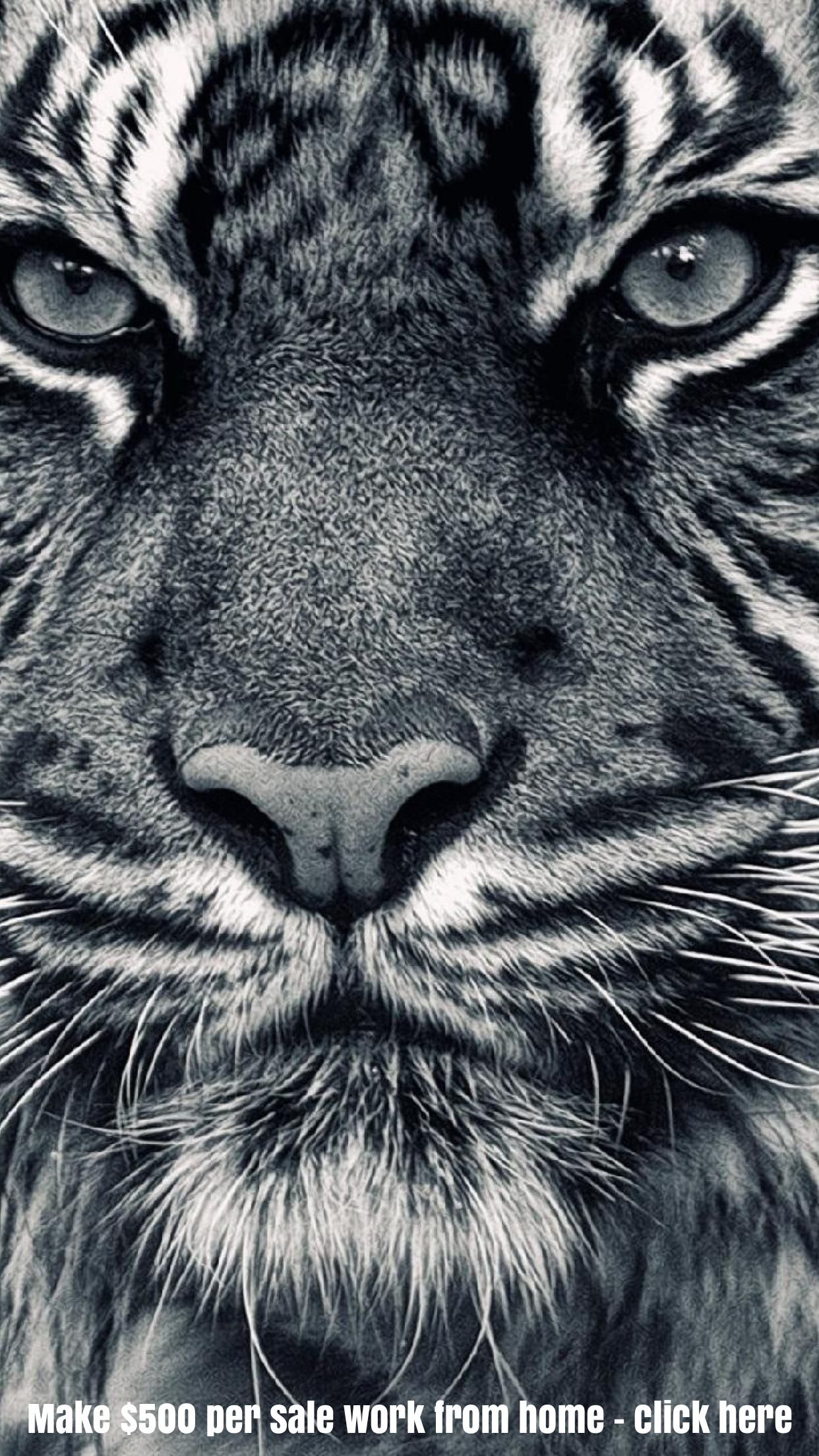 Grey Tiger iphone background wallpaper Tiger wallpaper