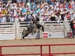 The Rodeo - Cheyenne - Reviews of The Rodeo
