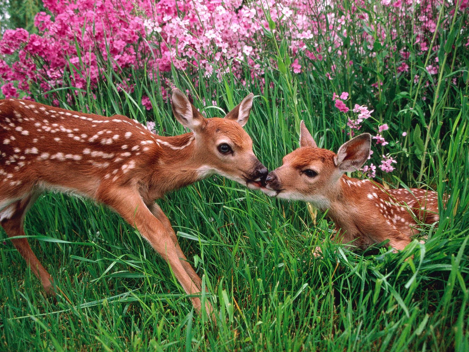 Spring Kisses, Olympic National Park, Washington | Animals, Cute baby  animals, Cute animals
