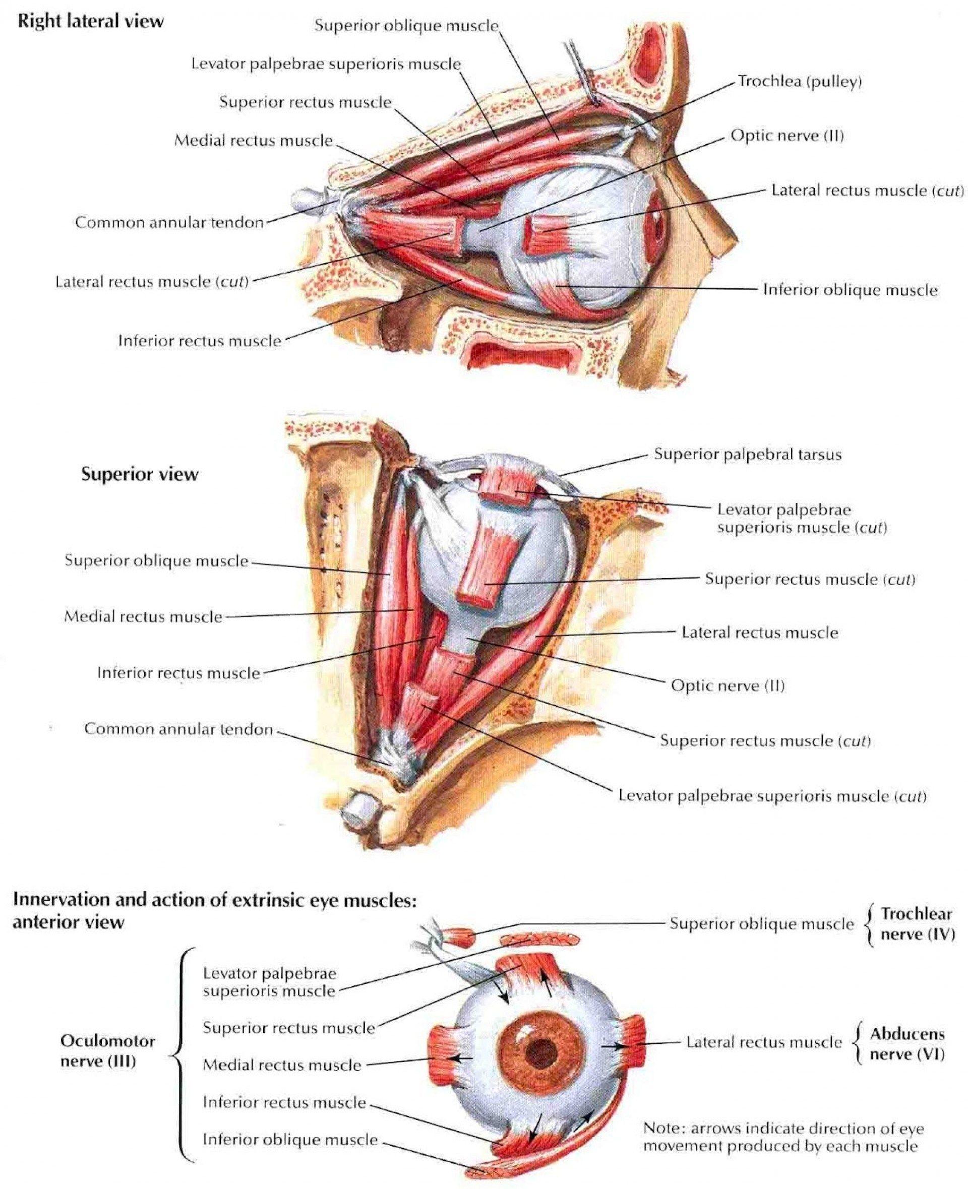 Rose Glen North Dakota ⁓ Try These Anatomy And Physiology 2