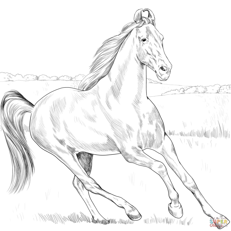 Marwari Horse Super Coloring Horse Coloring Books Horse Coloring Marwari Horses [ 1500 x 1500 Pixel ]