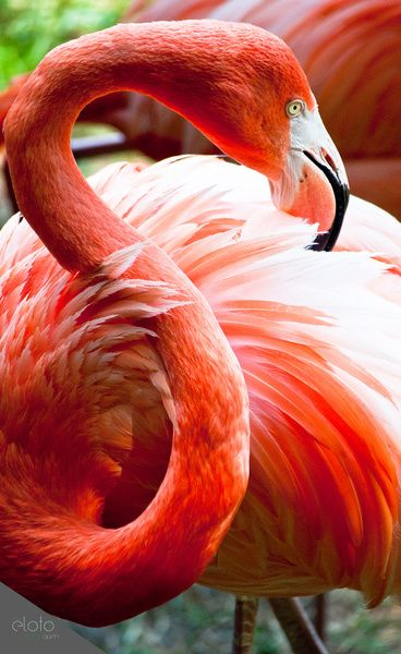 "Flamingo Art Print for the unit ""the Letter S"""