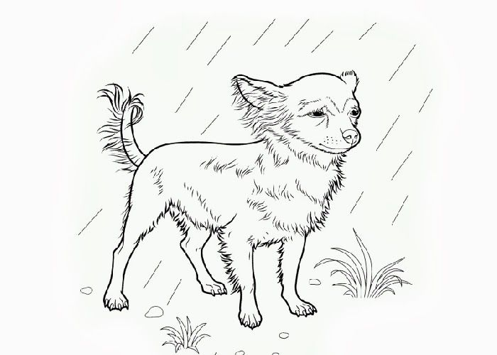 S Chihuahua Colouring Pages Puppy Coloring Pages Chihuahua Drawing Coloring Pages