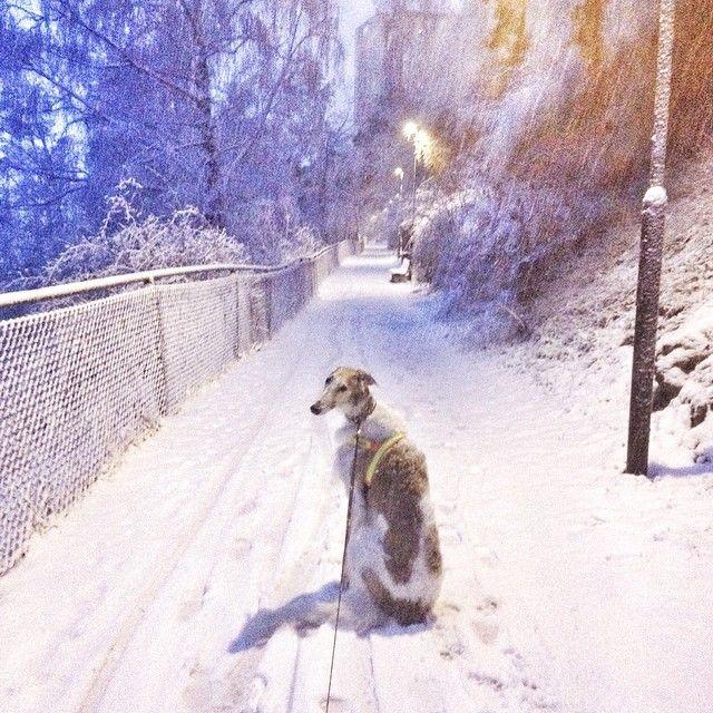Borzoi Daily Borzoi, Borzoi dog, Dog breeds
