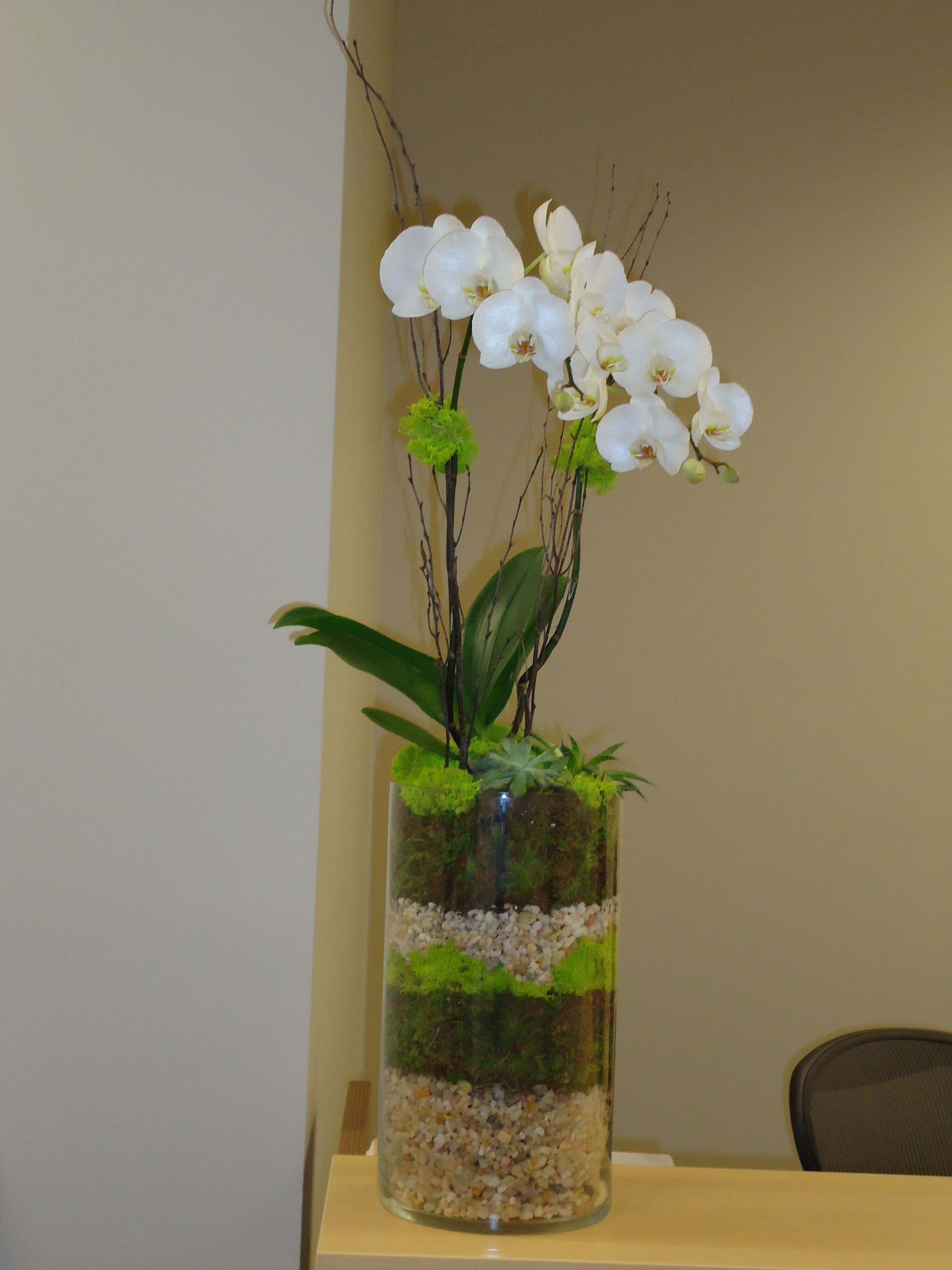 Perfect COM Living Floral Arrangement. Orchid With Succulent Under Plantings I Did  For A