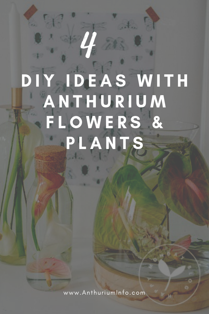 4 Diy Ideas For Mother S Day That Use Anthurium Flowers And Plants Anthurium Flower Anthurium Plant Care Houseplant