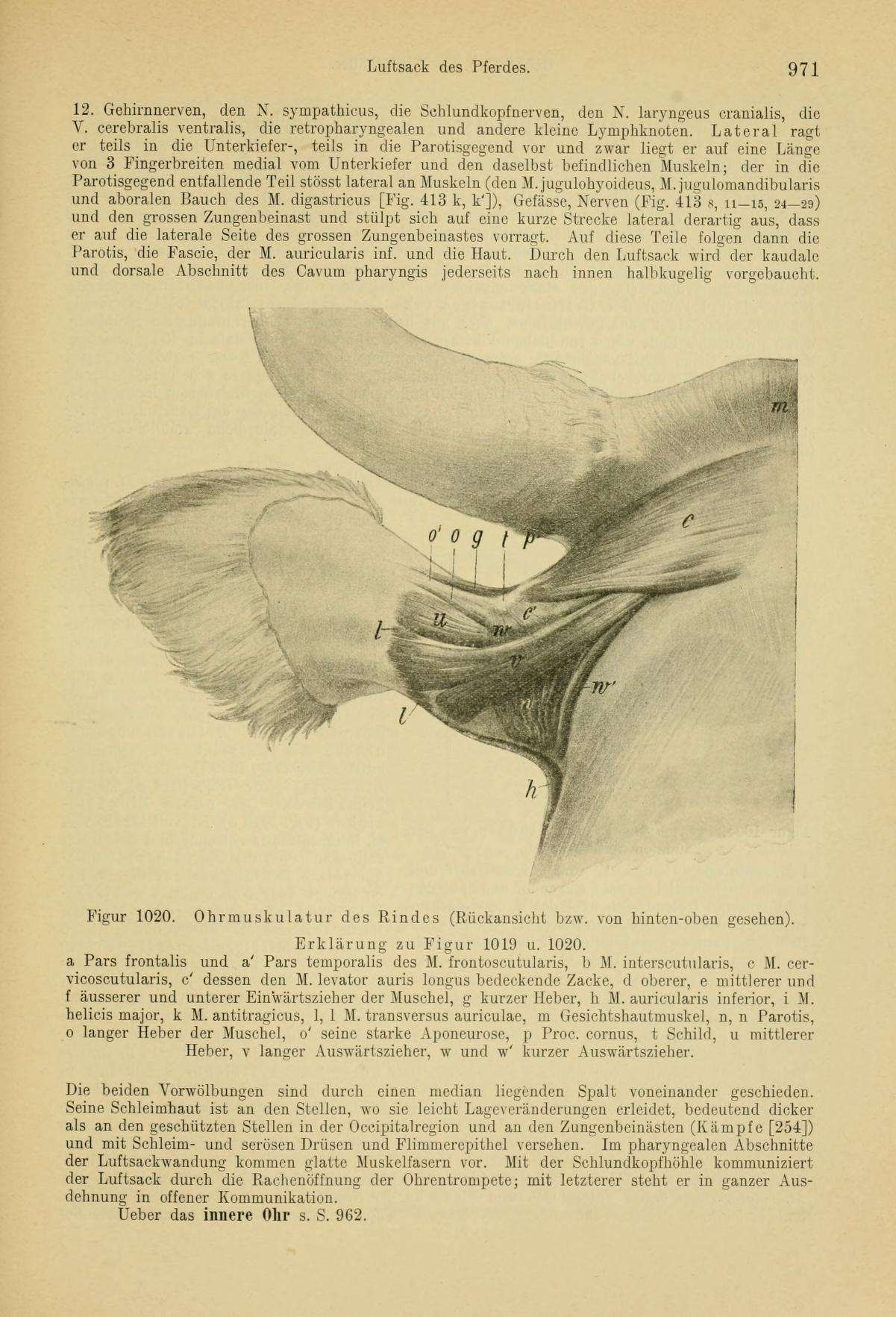 Charmant Definition Der Vergleichenden Anatomie Galerie ...