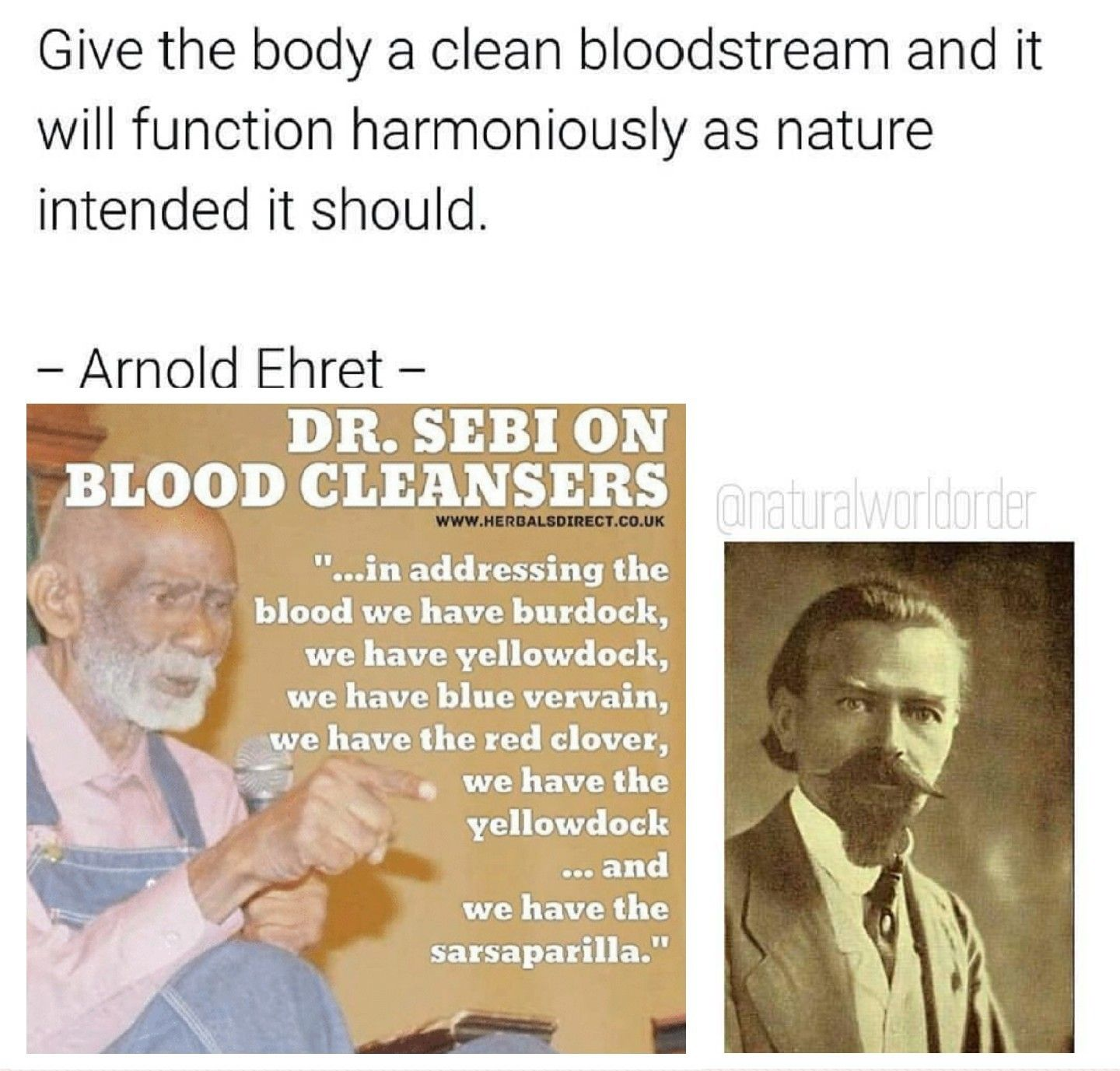 Herbs to cleanse the blood | Dr  Sebi Alkaline Electric