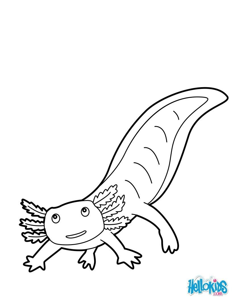 Mexican Salamander Coloring Nice Coloring Sheet Of Sea World More Content On Hellokids Com Animal Coloring Pages Coloring Pages Axolotl