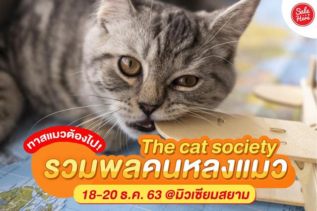 The Cat Society ม วเซ ยมสยามจ ดน ทรรศการ รวมพลคนหลงแมว ส ขภาพด ด แมว