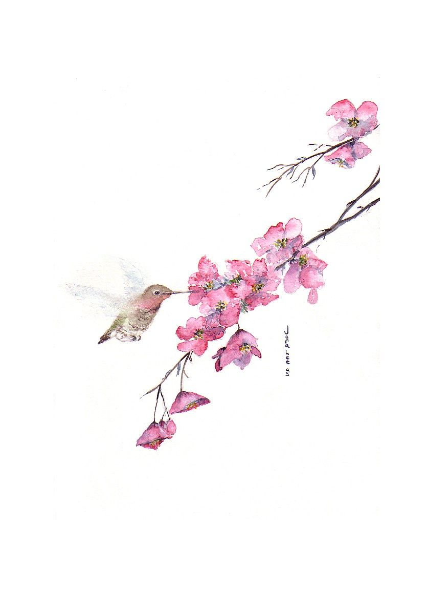 suni watercolor cherry blossom | Cherry Blossoms | Cherry blossoms ...