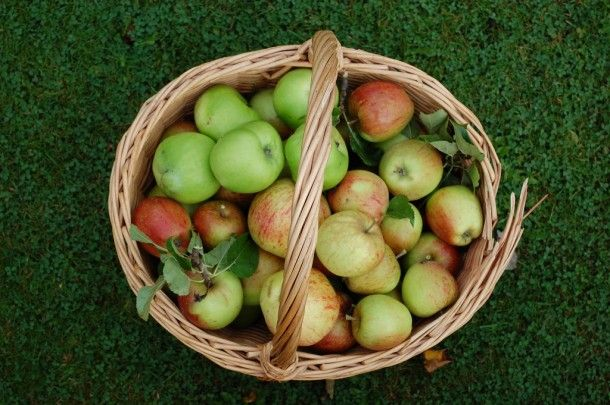 Beauty is Wellness: The Best Fruit for Fall Beauty | #Apples #BeautyFood | @Jolene Hart Organic Spa Magazine Blog | #OrganicSpaMagazine