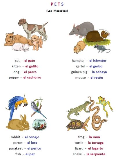 Learning Animals In Spanish Is Fun For All Ages This 30 Page