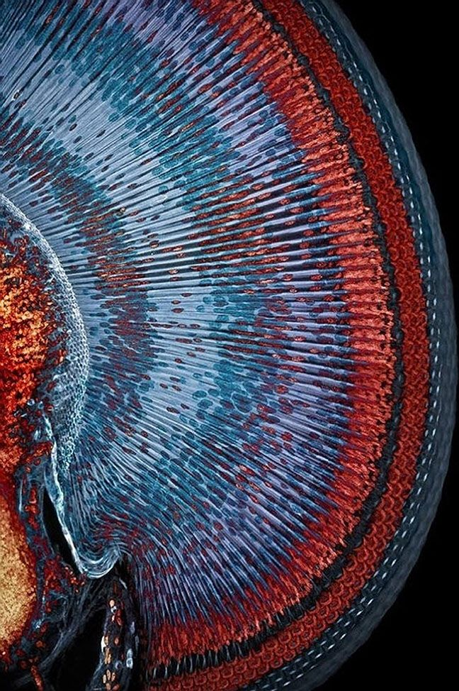 Eye of a blue dragonfly, from Microscopic inspiration