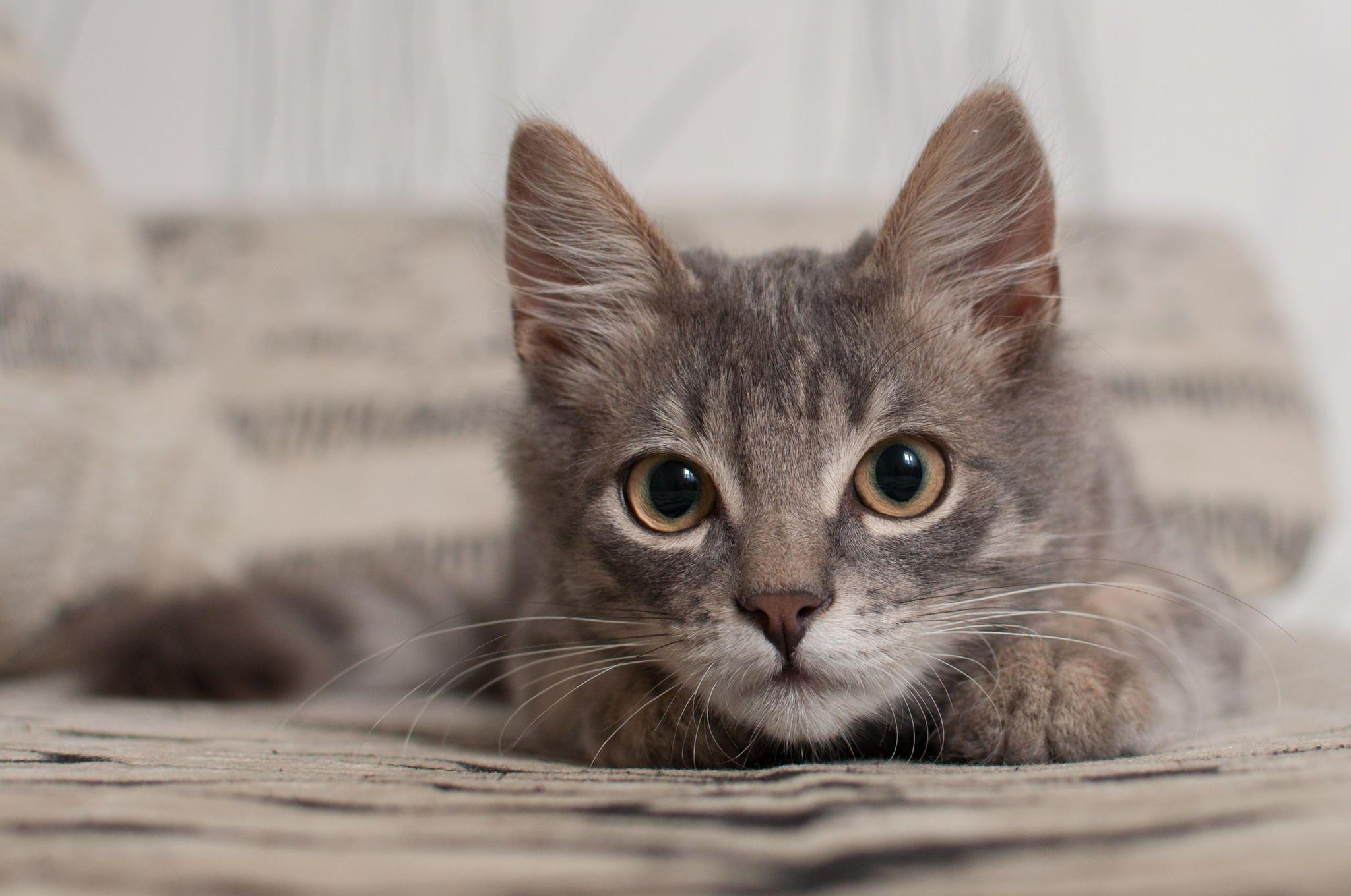 Felix the cat by Yuri Pozdnyakov on 500px