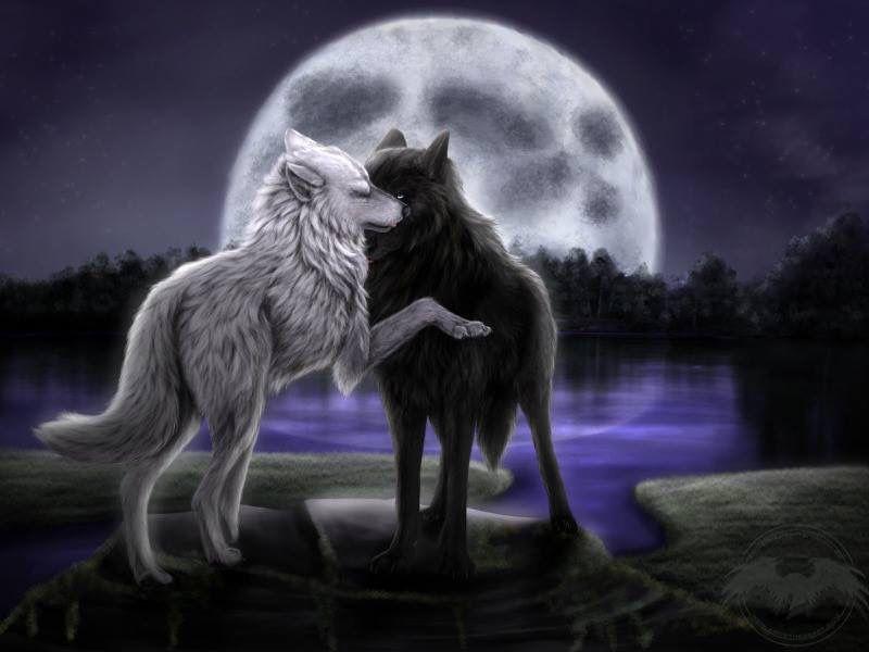 Epingle Par Rose Petal Sur Loups Et Garou Loup Dessin Loup Garou Images Loup