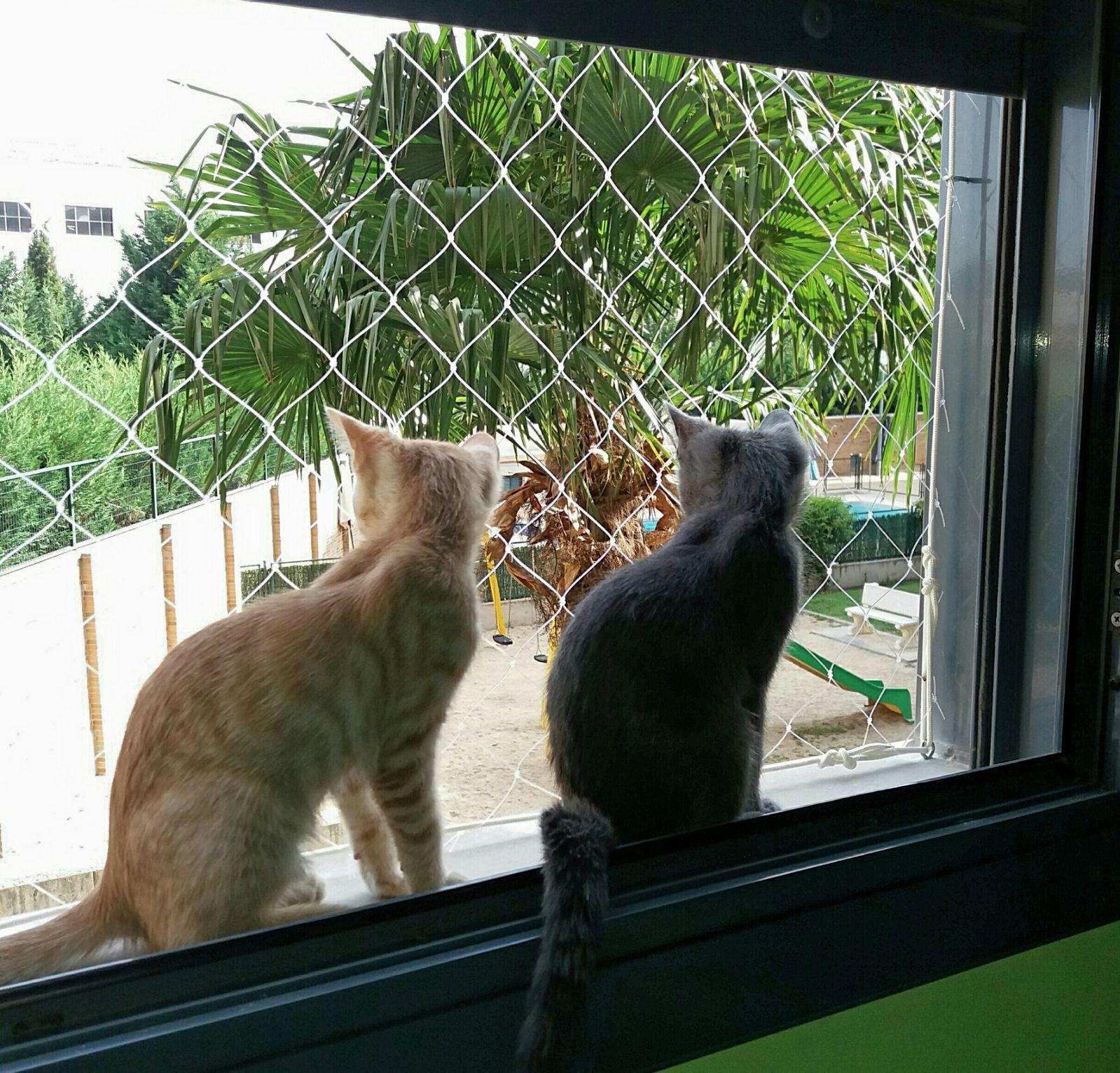Mallas De Seguridad Para Gatos Y Mascotas Redes Anticaídas Seguridad Para Ventanas Gatos Mascotas