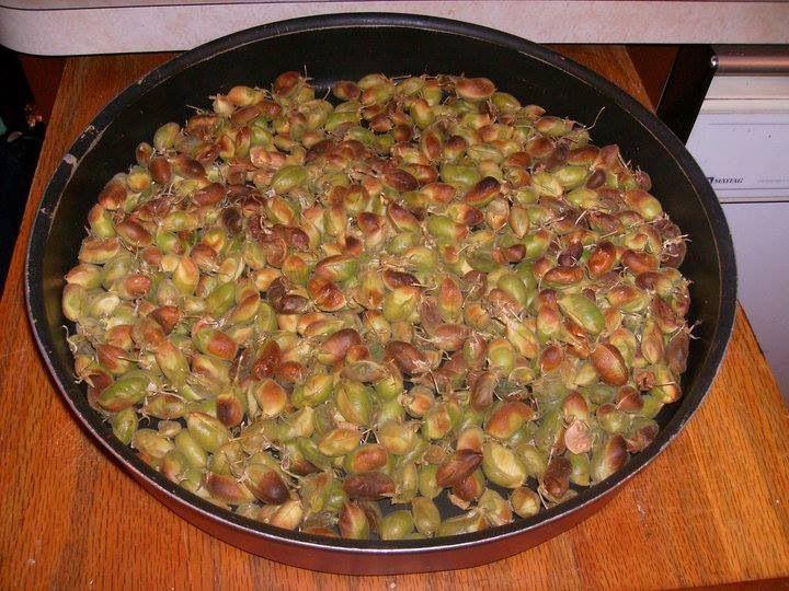 حمص اخضر مشوي حاملة Cooking Recipes Eastern Cuisine Cooking