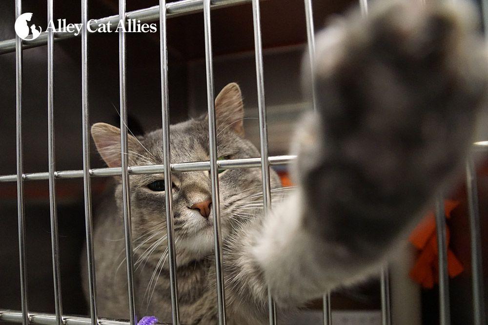 Alley Cat Allies - News