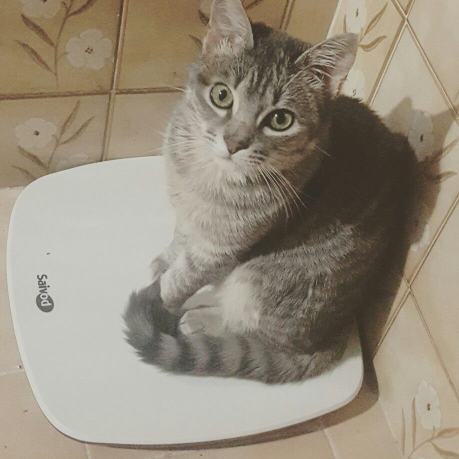 He wants to know his weight.. so kayla is 2.5kg!