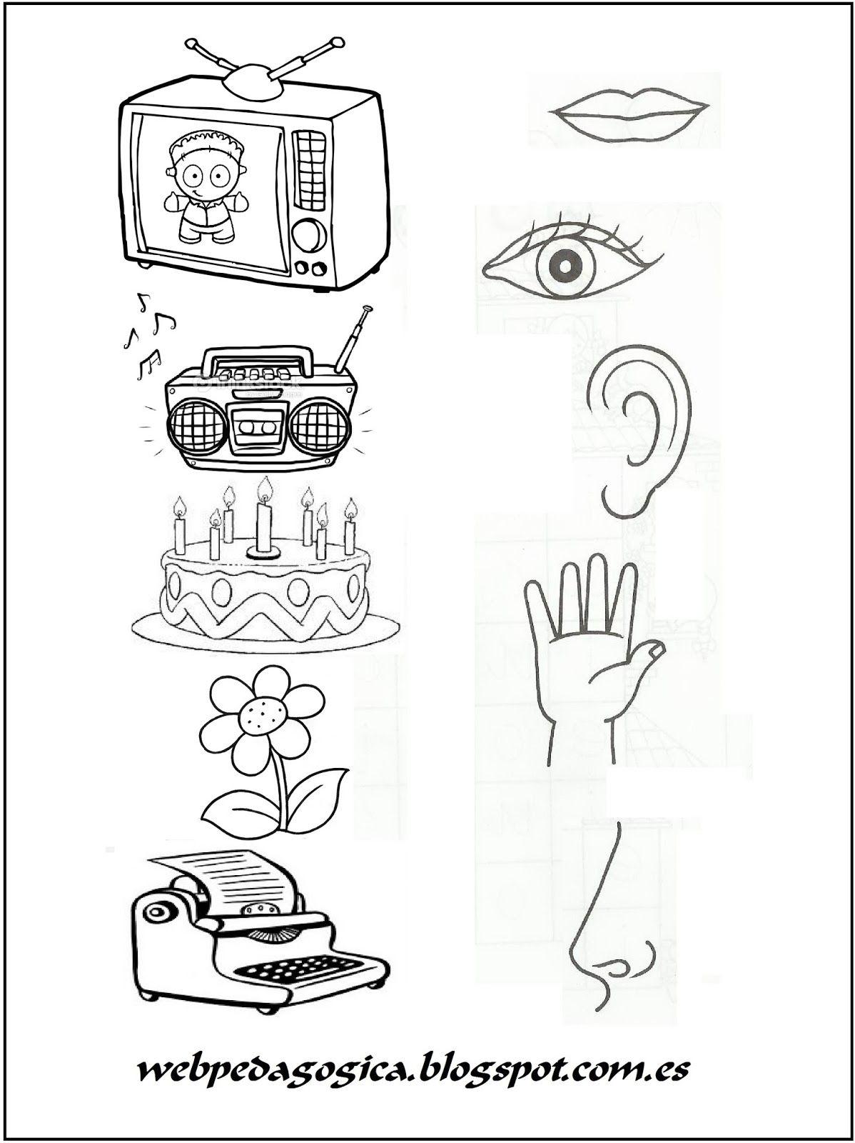 Objeto Sentido Jpg 1198 1600 Los Cinco Sentidos En Preescolar Los Sentidos Para Niños Actividades De Aprendizaje Preescolares