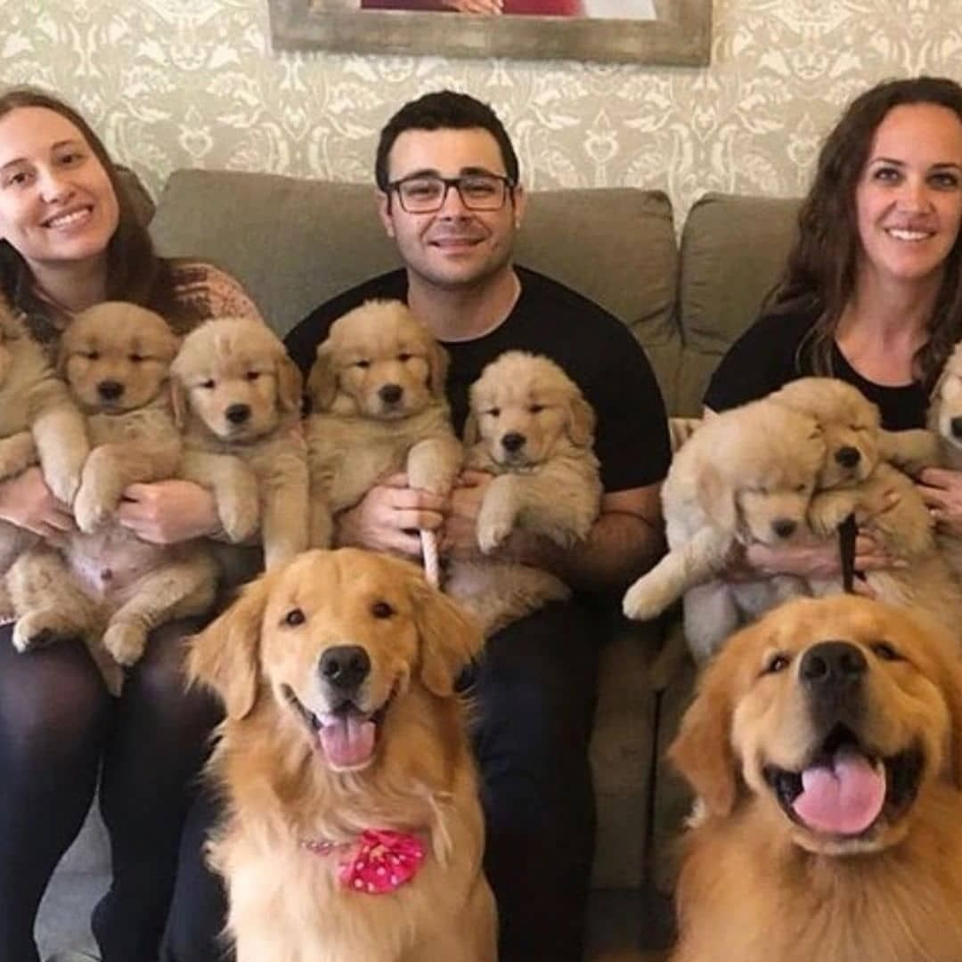We Have Males And Females Available And Ready To Go Home Prices Are Reduced And We Golden Retriever Baby Golden Retriever Golden Retriever Breeder
