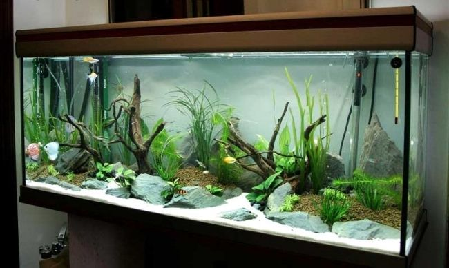 100 ideas integrate aquarium designs in the wall or in the living room fish tropical fish - Decorative fish tanks for living rooms ...