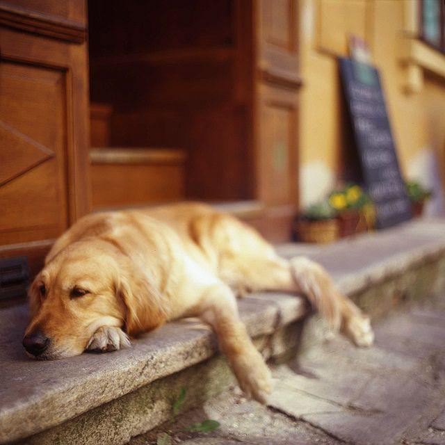Almost Asleep Hundebabys Kleine Hunde Und Hunde