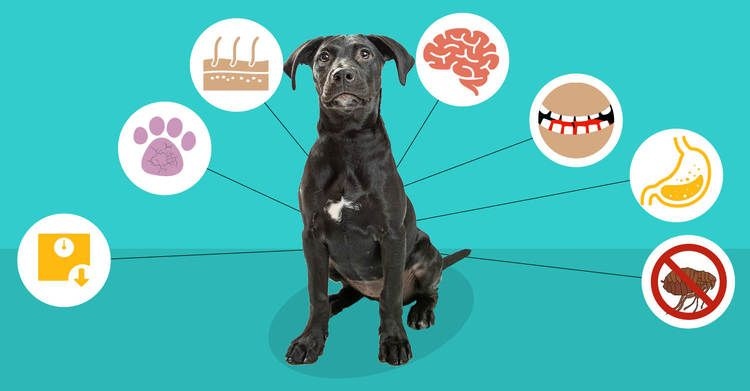 Top 7 Reasons To Use Coconut Oil For Dogs | Coconut oil ...