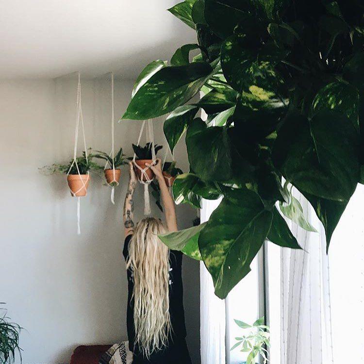 Instagram Indoor plants, Macrame plant hanger, Plant magic
