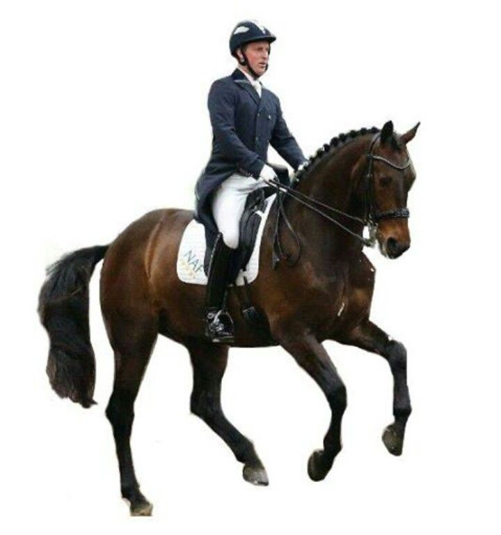 Dressage horse no background