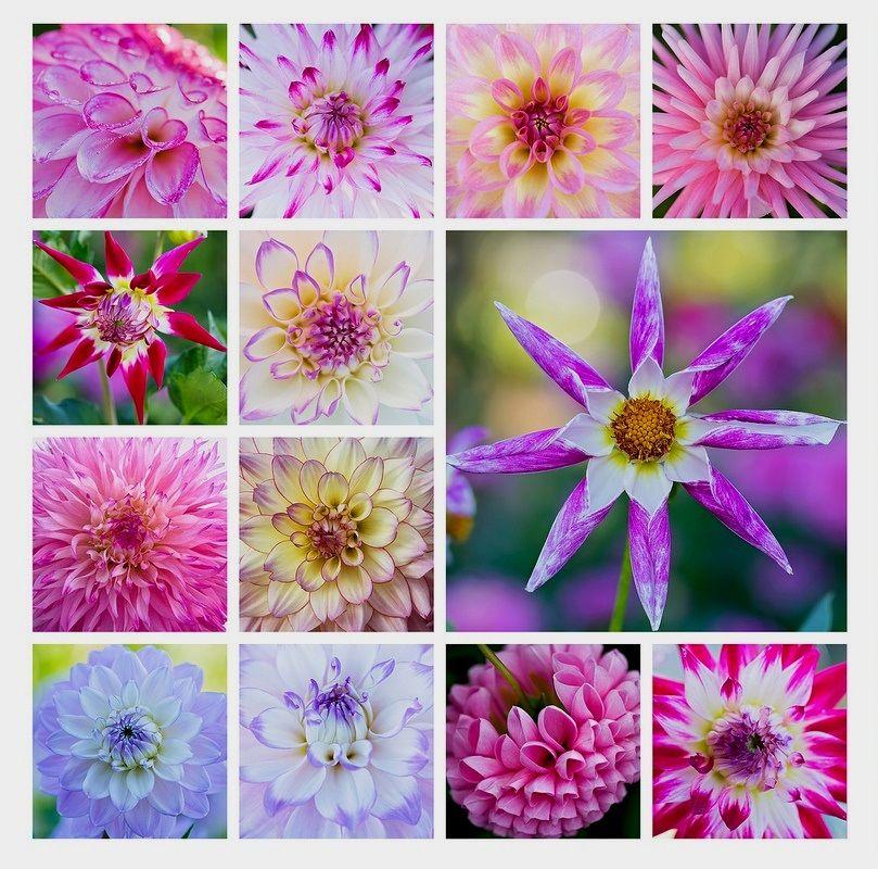 Pin van Kristine op art photo mosiacs Bloemen